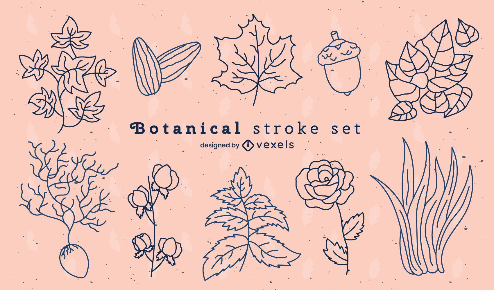 Conjunto de trazos de naturaleza de flores y hojas botánicas.