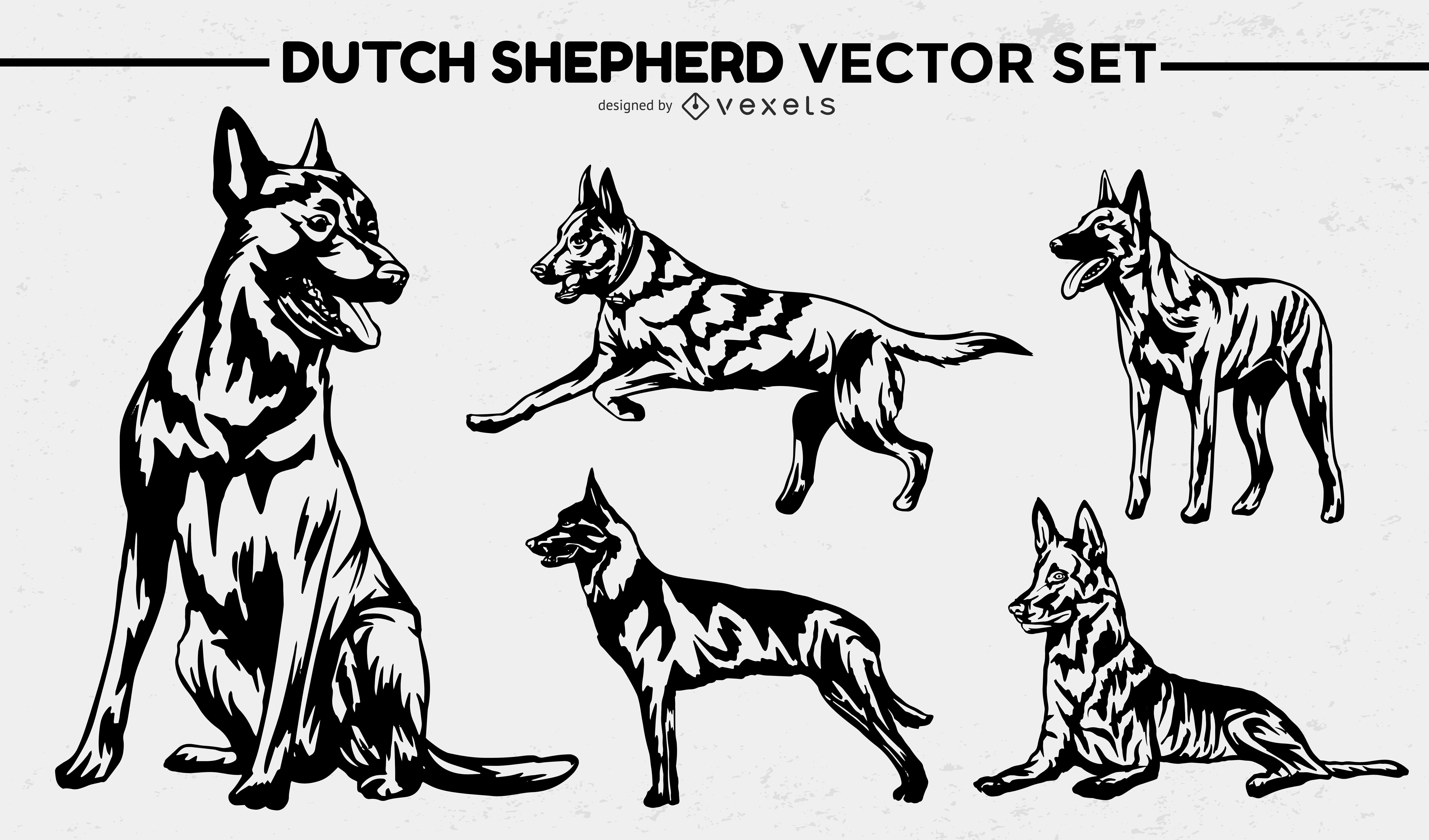 Conjunto de poses de animais de raça de cão pastor holandês