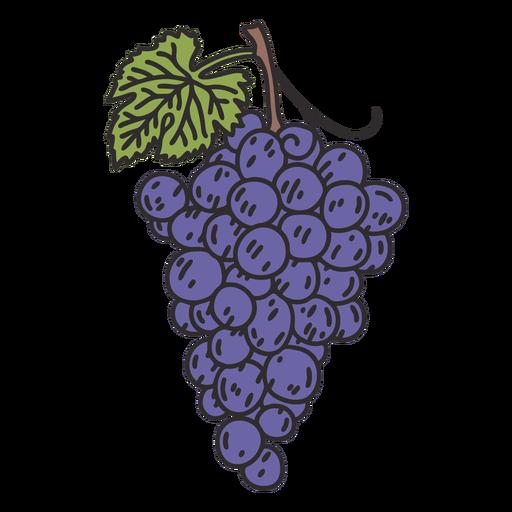 Bunch grapes illustration