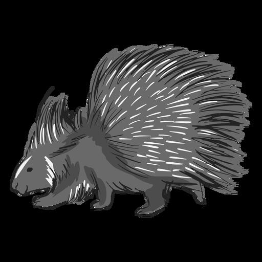 Porco-espinho - 0