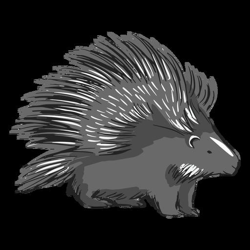 Porcpine animal color stroke