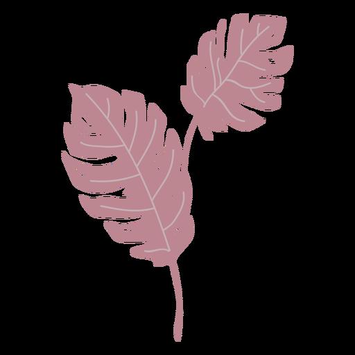 Pink monstera leaves semi flat