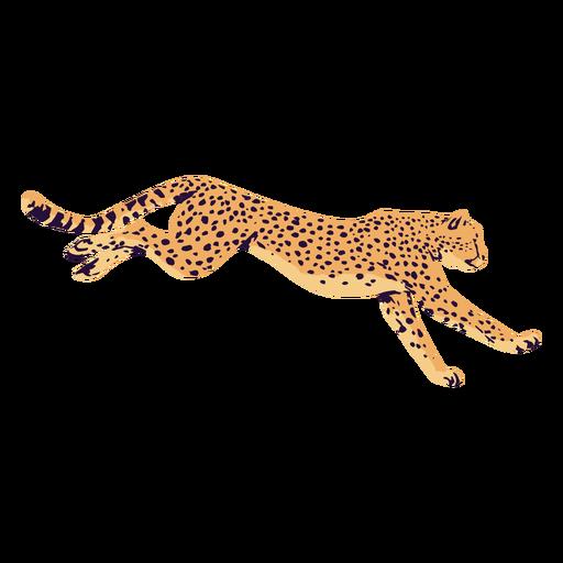 AnimalPrint - 11