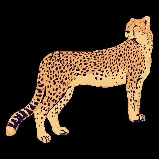 AnimalPrint - 12