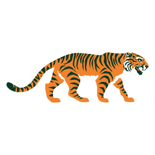 Tiger walking flat