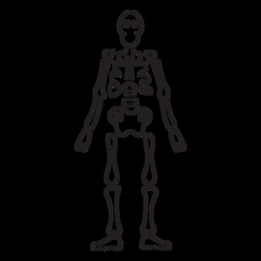 Full skeleton stroke