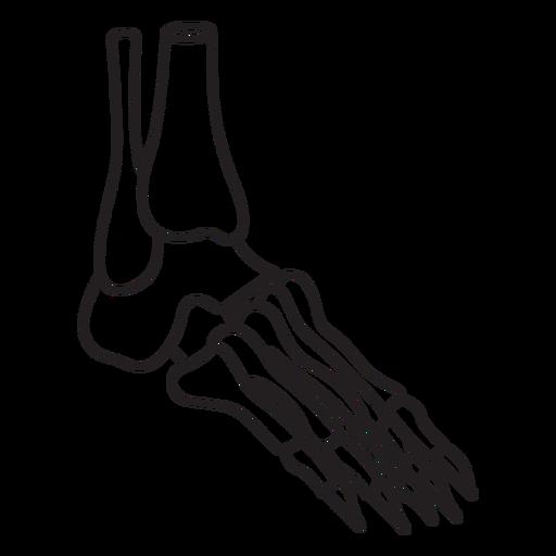 Skeleton foot profile stroke