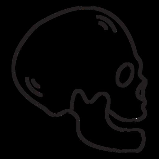 Skull profile stroke