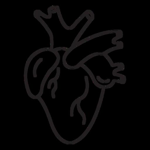 Human heart stroke
