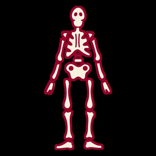 Skeleton color stroke