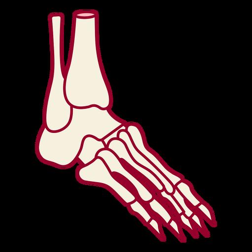 Skeleton foot color stroke