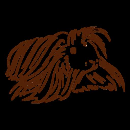 Guinea pig long hair doodle