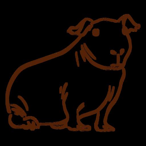 Skinny guinea pig doodle