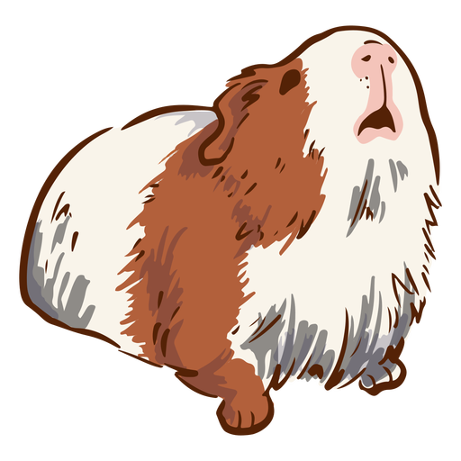 Looking up guinea pig illustration
