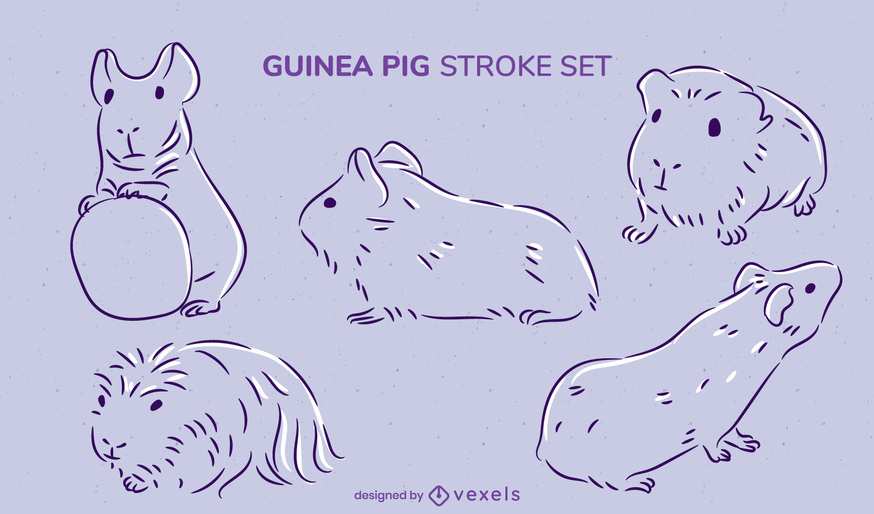Guinea pigs rodent animal stroke set