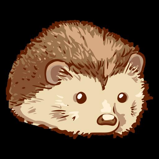 Cute Hedgehog pet animal