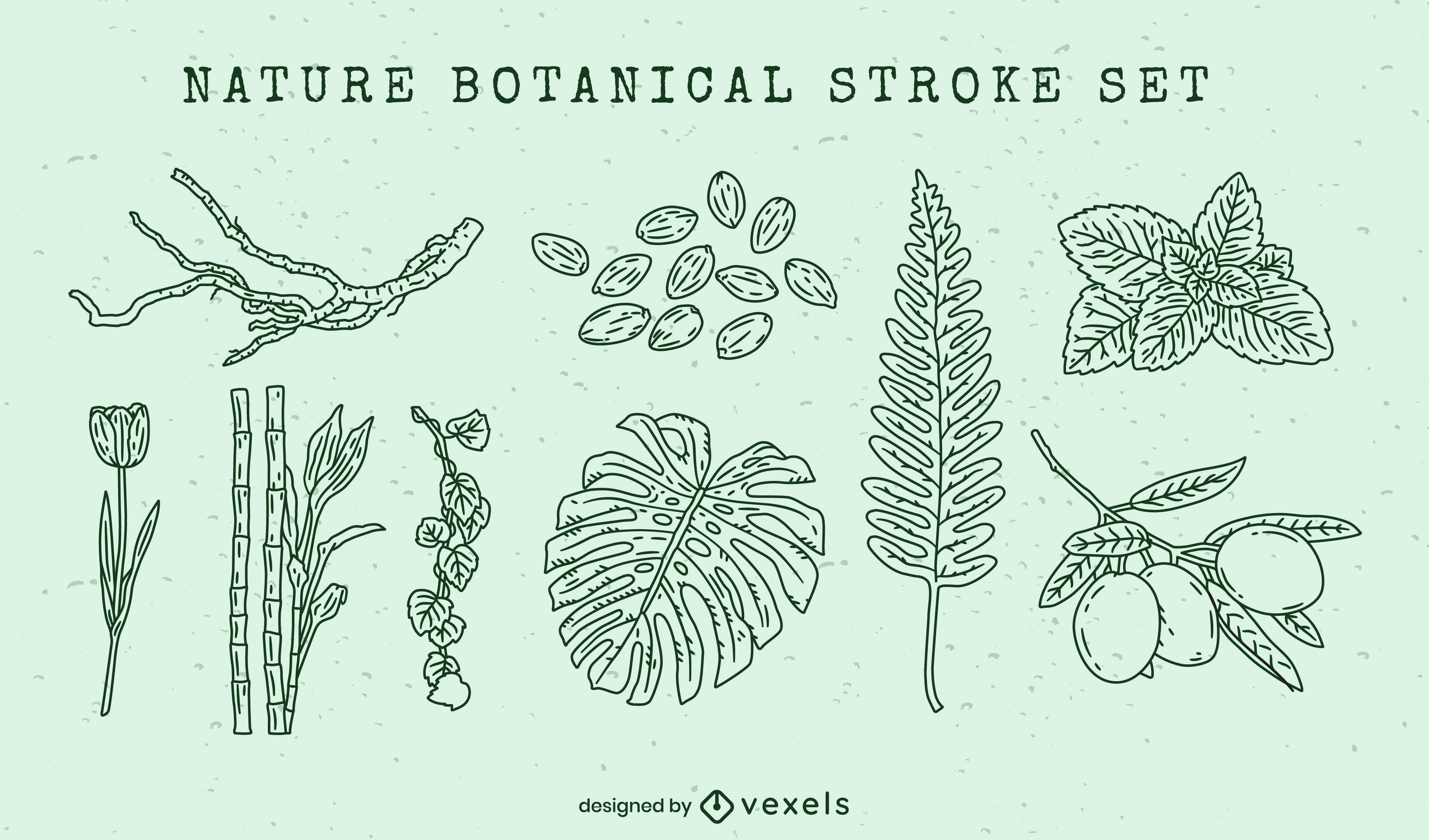 Nature botanical elements stroke set
