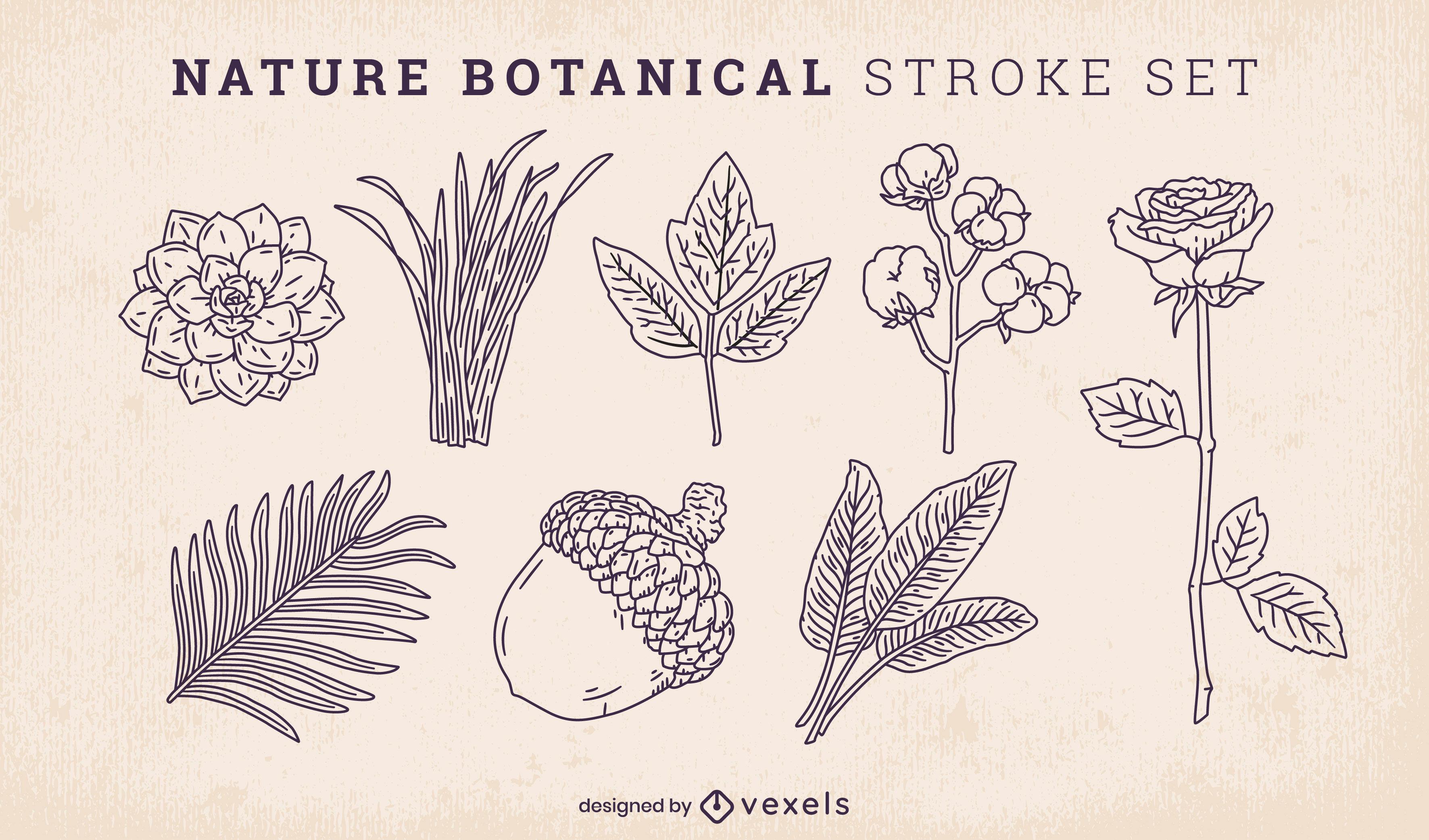 Hojas naturales y conjunto de trazos botánicos.