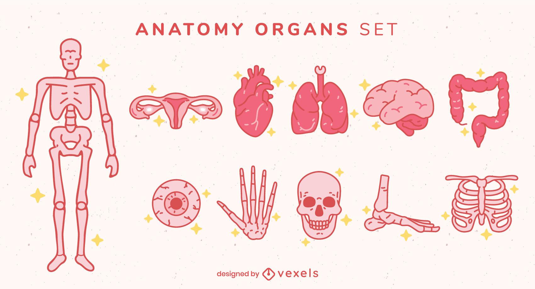 Conjunto de trazos de color de elementos de anatomía