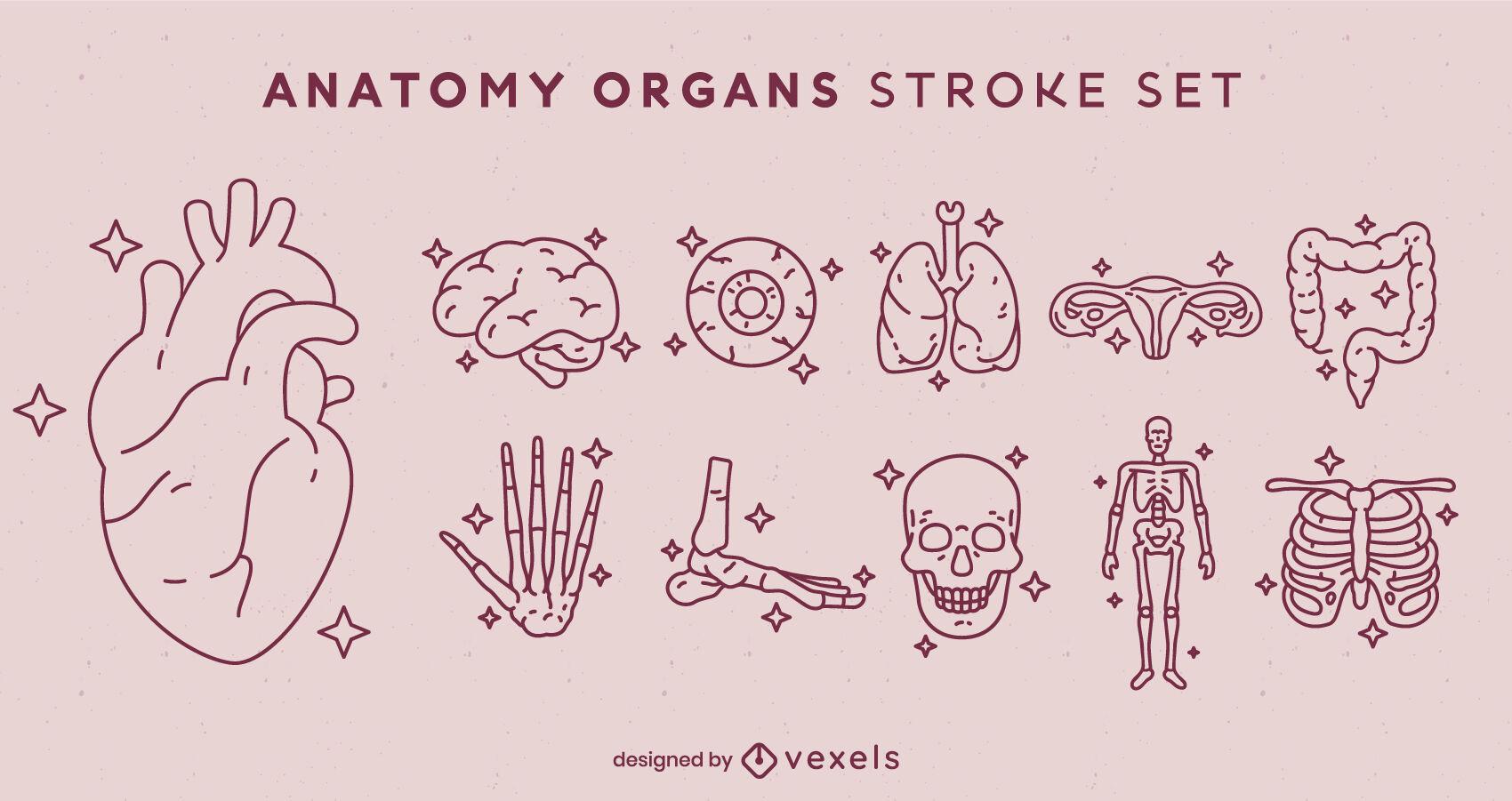 Conjunto de trazos de elementos de anatomía