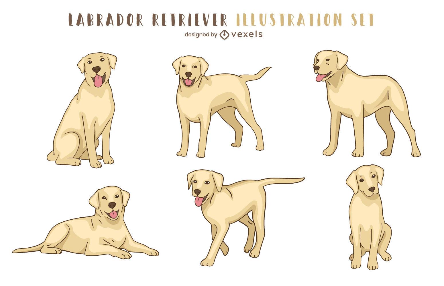 Golden labrador retriever dog animal set