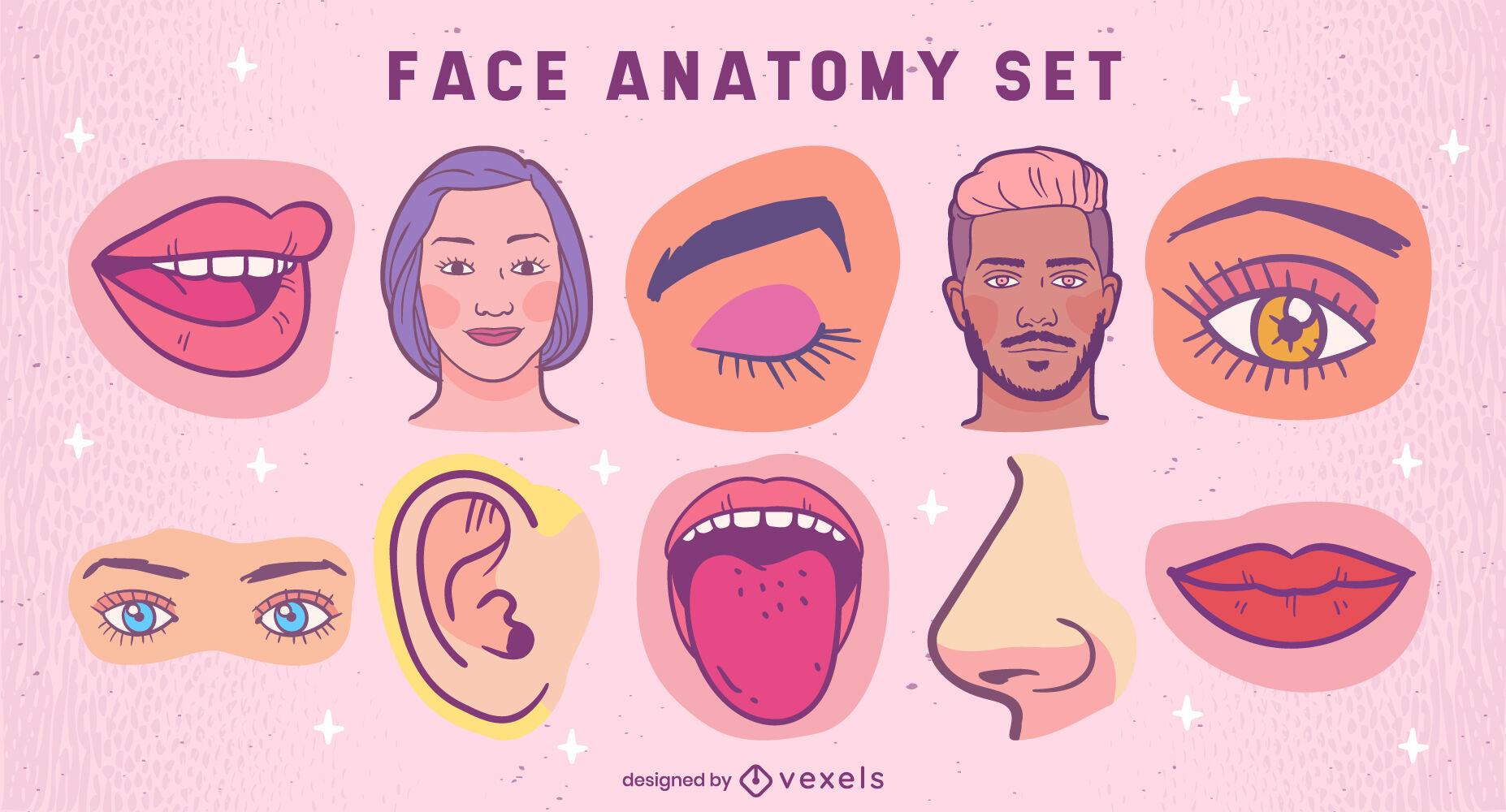 Conjunto de ilustraciones de anatomía facial