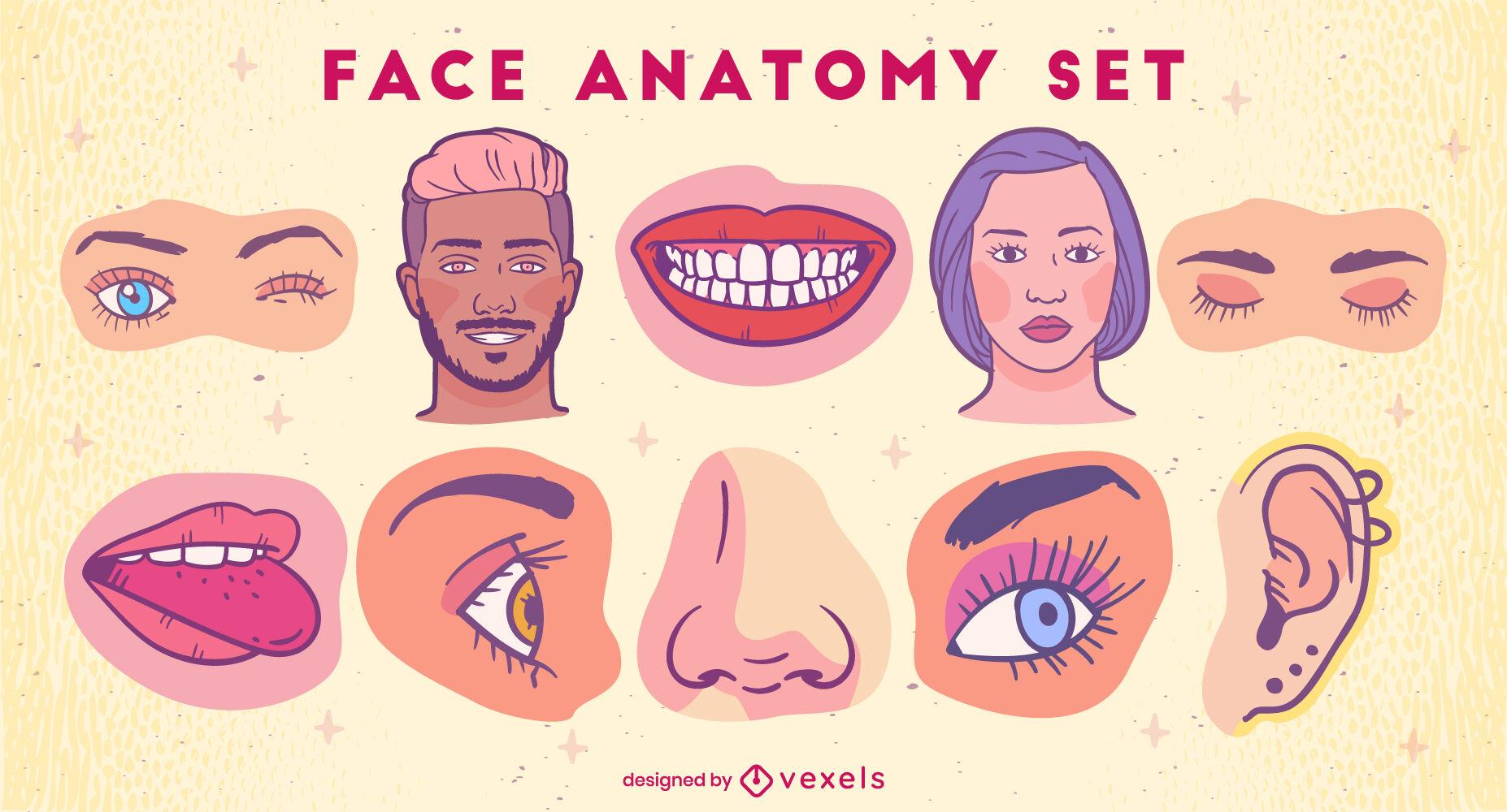 Conjunto de ilustrações coloridas de anatomia facial
