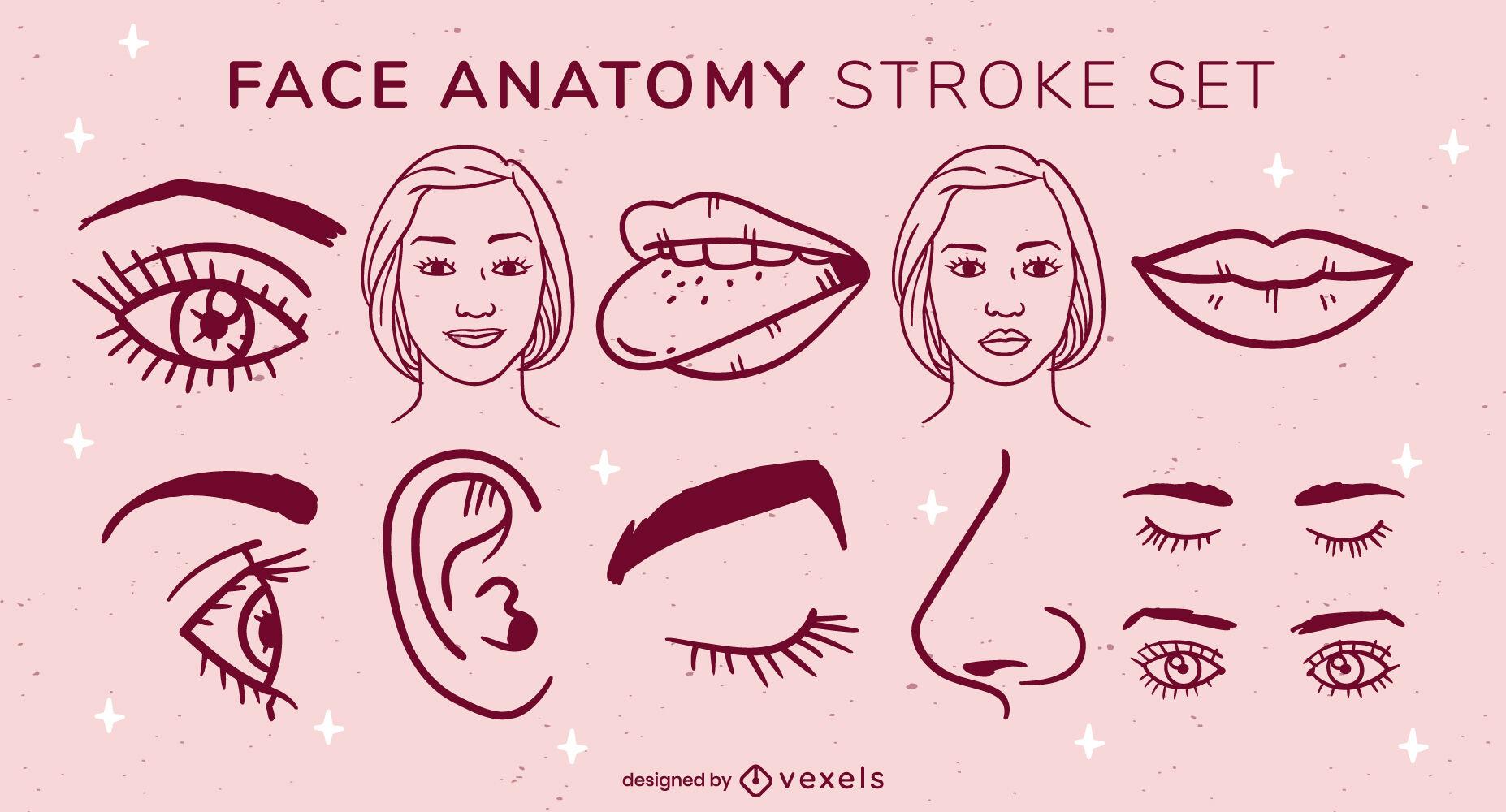Face anatomy elements set stroke