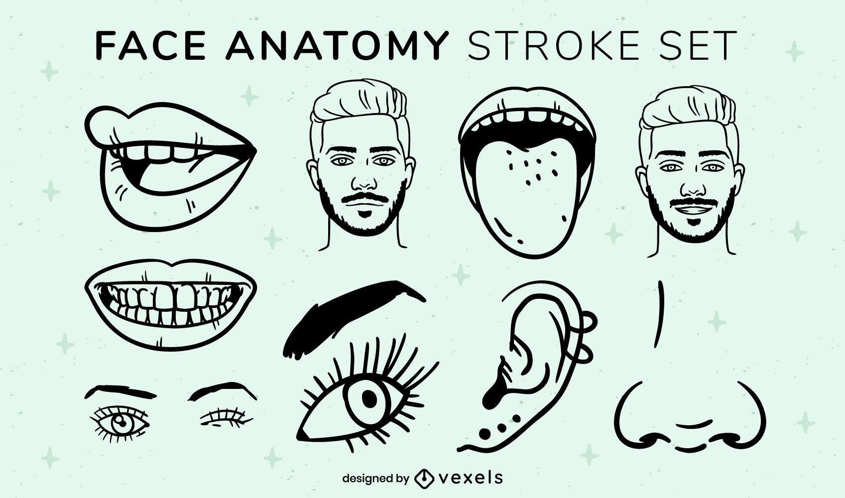 Conjunto de trazos de elementos de anatomía facial