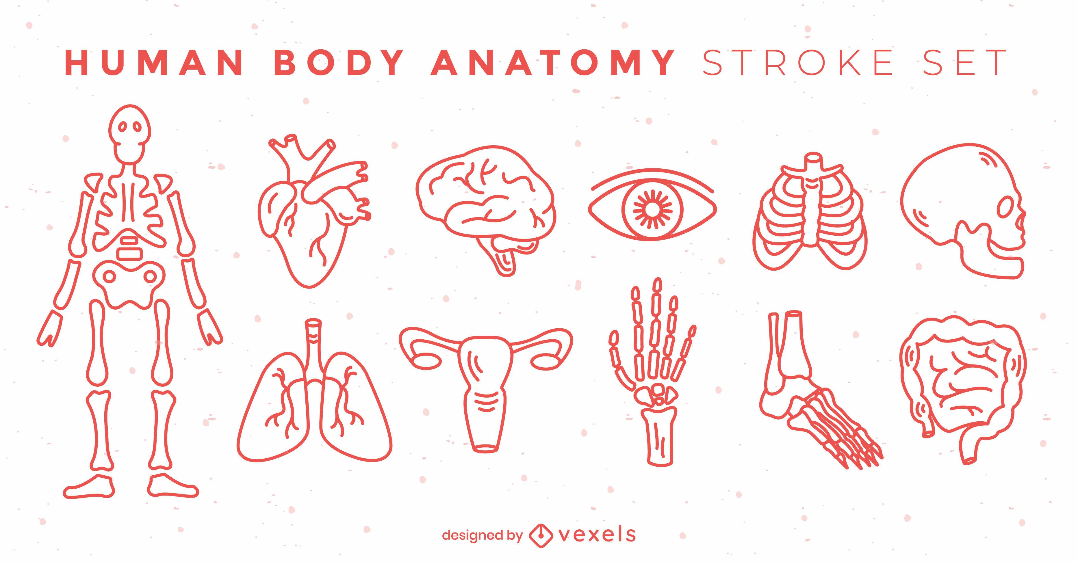 Conjunto de trazos de elementos del cuerpo de anatomía
