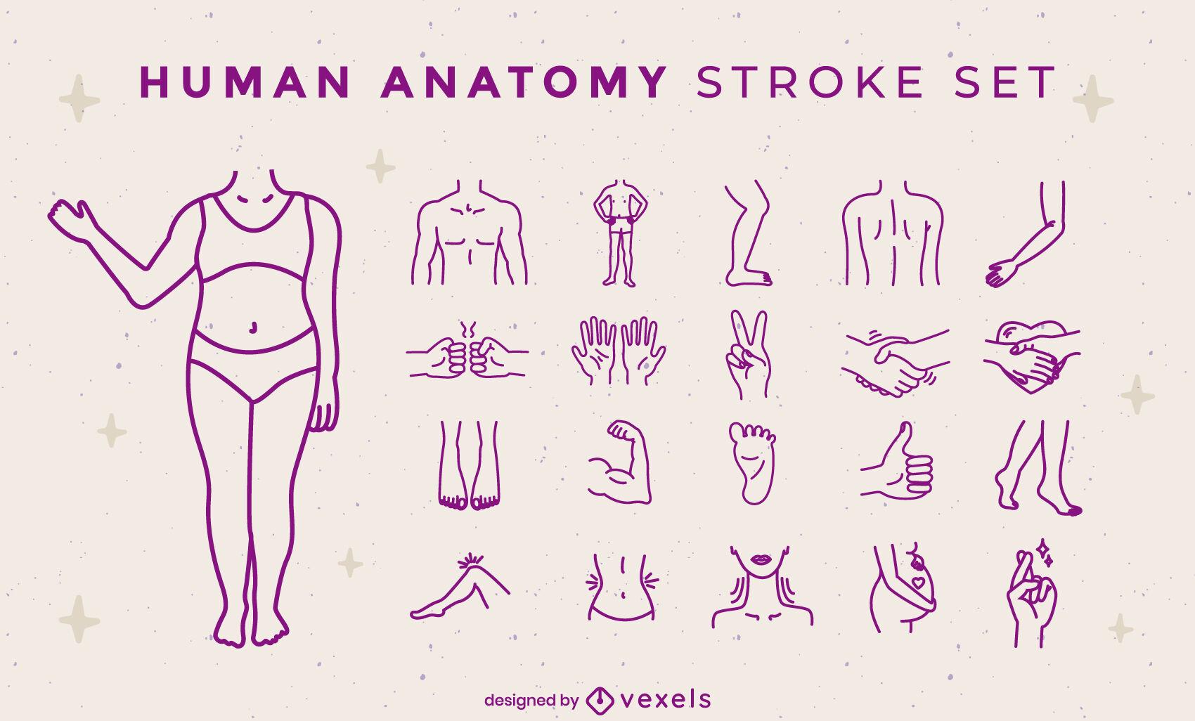 Conjunto de trazos de partes del cuerpo de anatomía humana