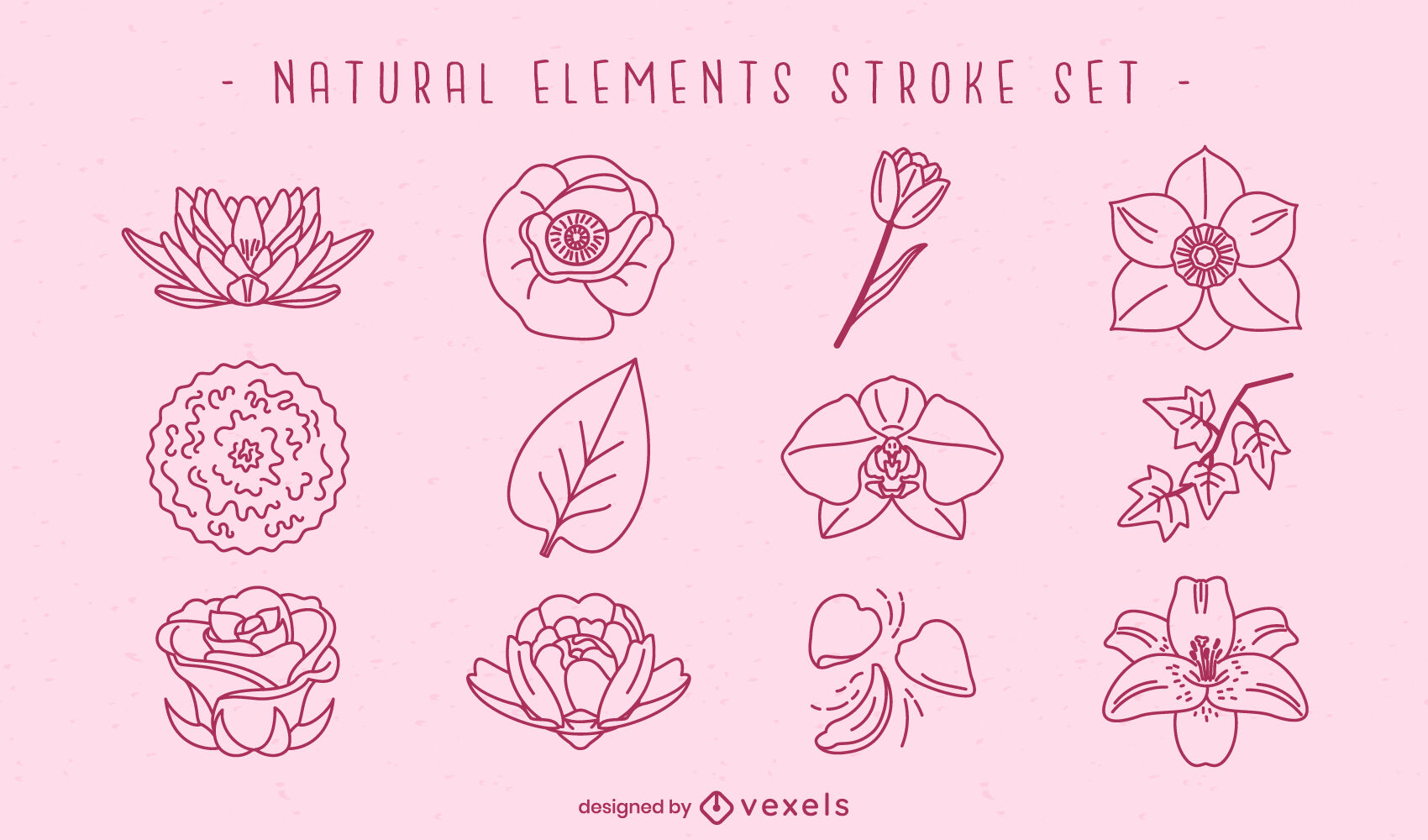 Flowers and leaves natural elements stroke
