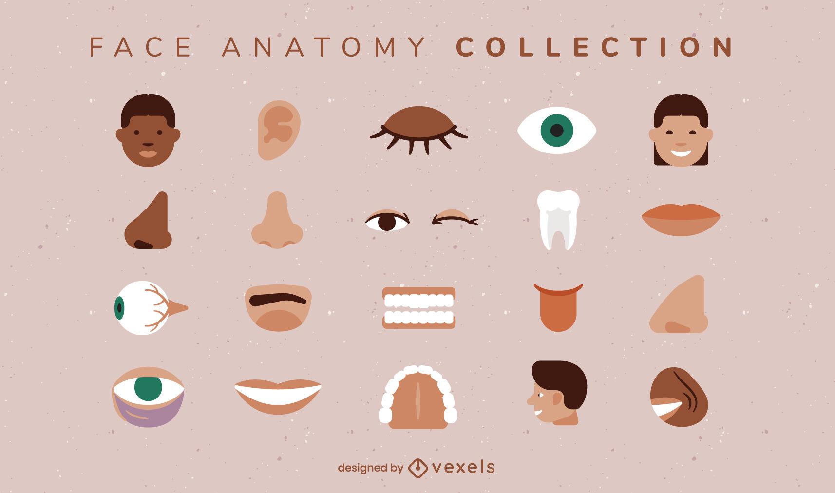 Conjunto de anatomía facial de partes del cuerpo humano