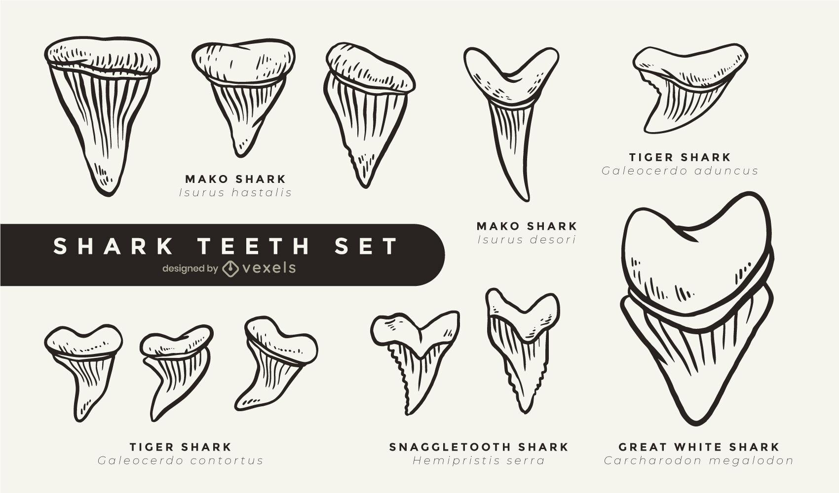Juego de dientes de tiburón fresco trazo relleno