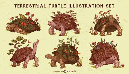 Terrestrial turtle animals nature set