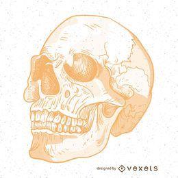 Ilustración malvada del cráneo del vector