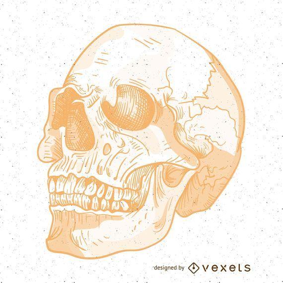 Malvado vector ilustración de cráneo