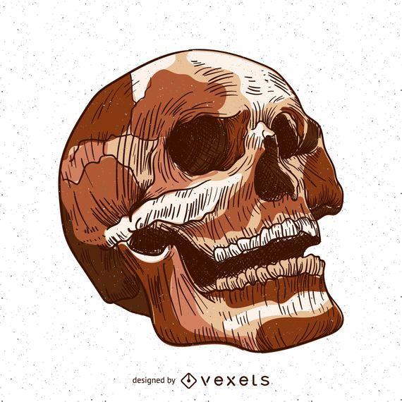 Ilustración de cráneo aislado