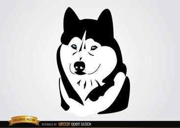 Cão Siberian Husky