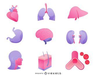 Órganos humanos