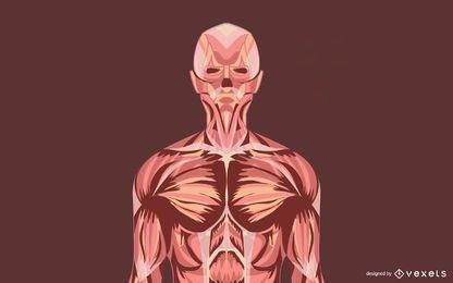 Vetores sujos anatômicos da ilustração