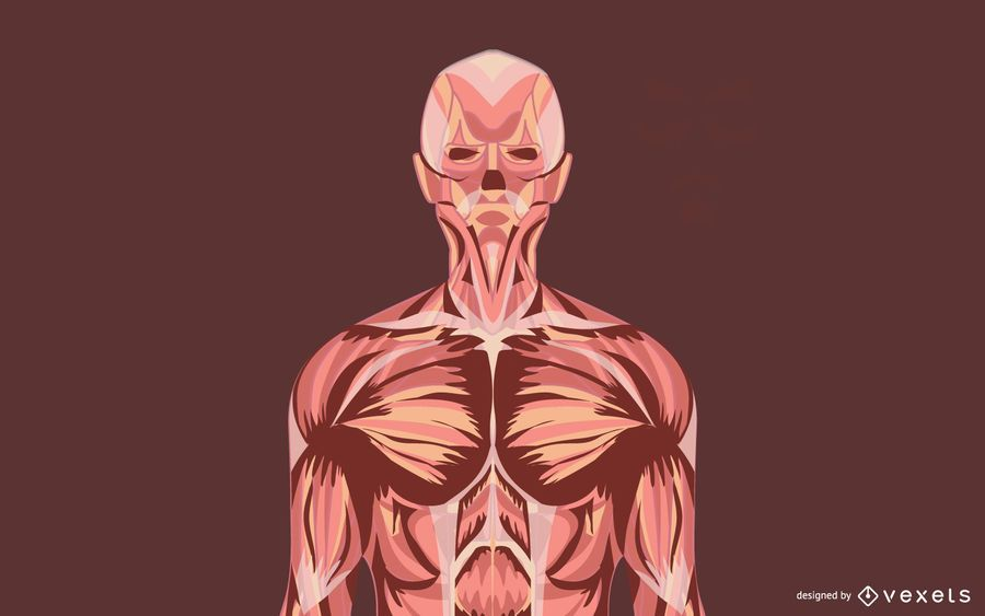 Anatomical Grungy Illustration Vectors