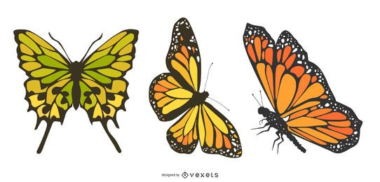 Três vetores de borboleta linda