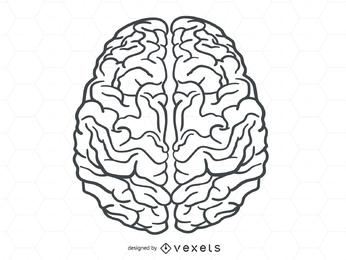 Vector de cerebro humano