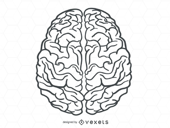 Vetor do cérebro humano