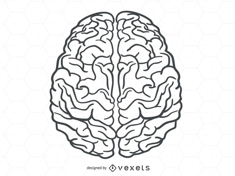 Vector cerebro humano