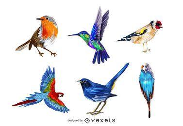 Paquete de pájaros coloridos realistas