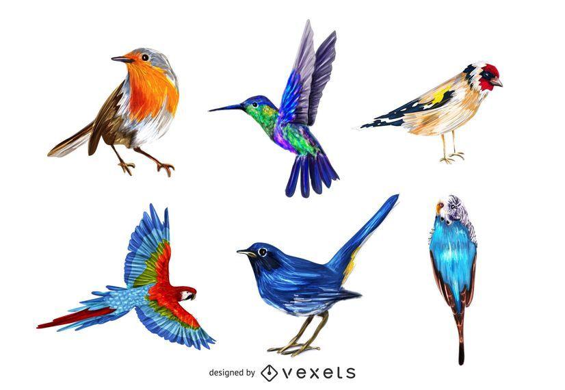 Pacote de aves colorido realista