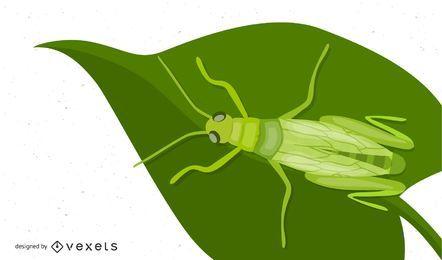 Insecto saltamontes verde