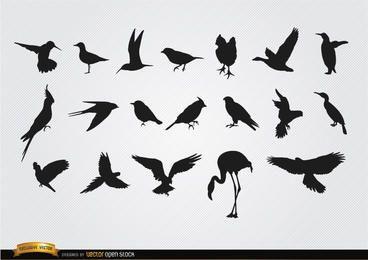 Conjunto de siluetas de especies de aves.